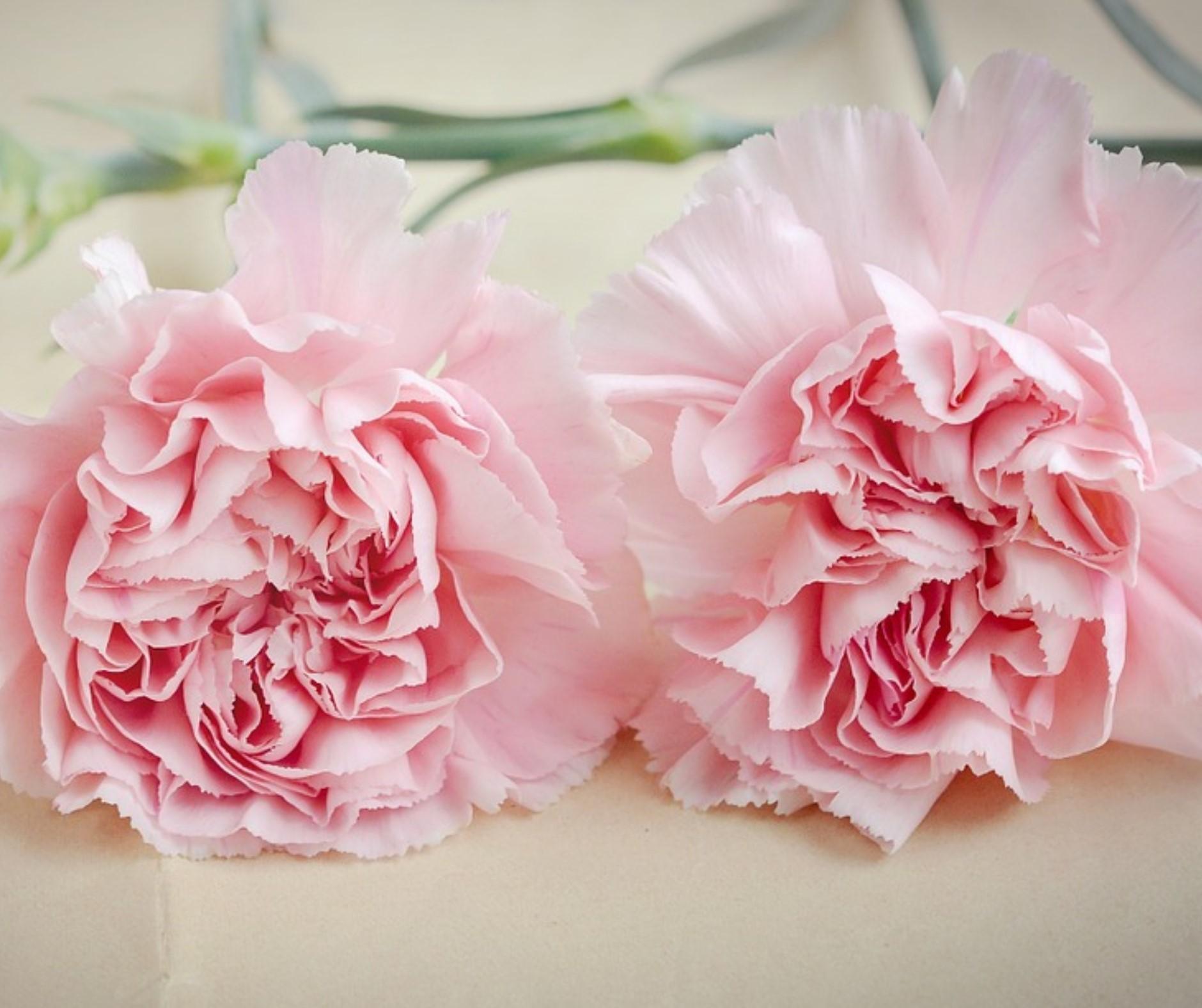 Heiratsantrag mit Blumen
