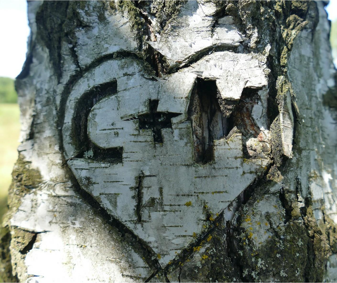 Herz in Baumrinde Heiratsantrag